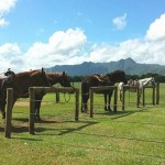 Horsing Around Kauai's North Shore