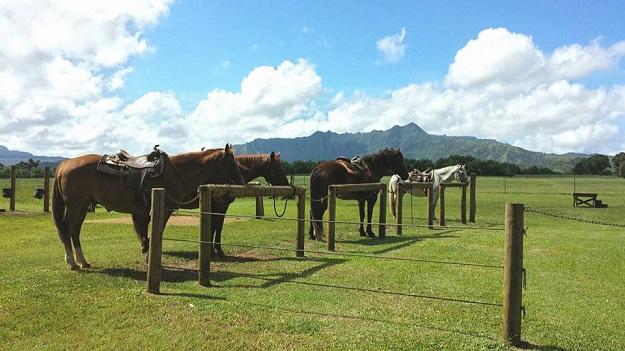 Kauai_Horses