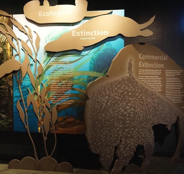 Horses Dragons Vanishing - Extinction Display