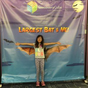 Spooky Science - Bats