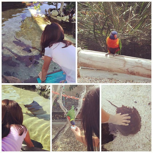 International Children's Festival - Aquarium of Pacific Animals