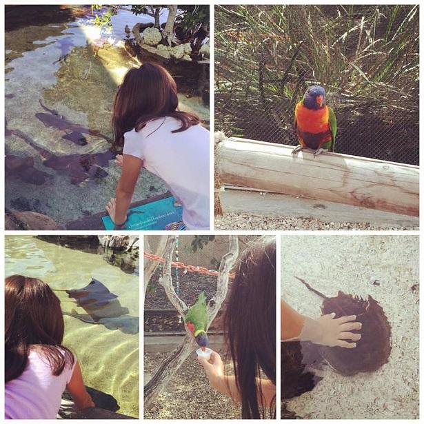 International Children's Festival - Aquarium of Pacific Animals