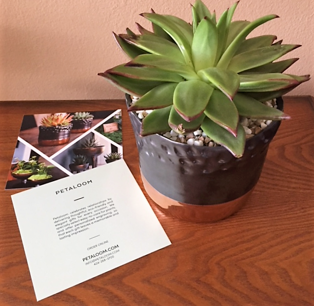 Petaloom Plant Gifts Gemma Lipstick-Brochure