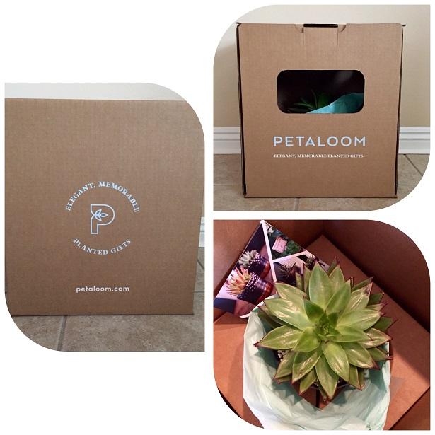 Petaloom Plant Gifts Packaging
