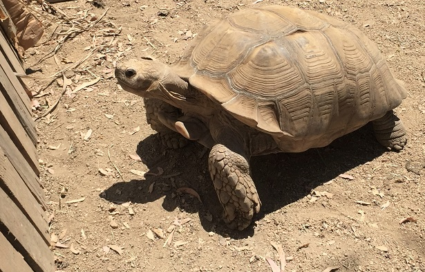 Turtle Tale Reptacular Ranch Tortoise Town