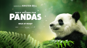 Pandas: IMAX Film in Theaters August 17 for Special One-Week Engagement