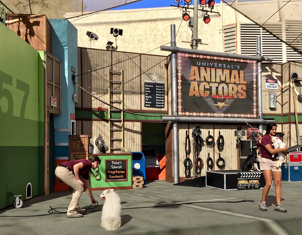 Universal Studios Hollywood Animal Actors