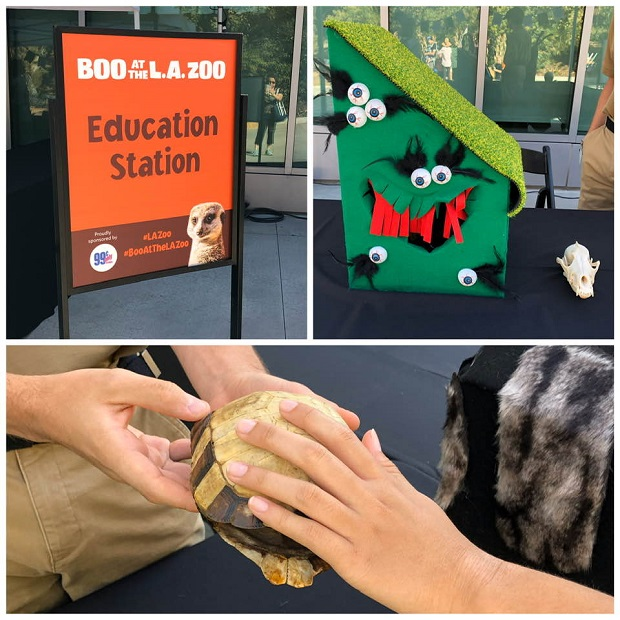 Boo at the LA Zoo 2019 Education Booth