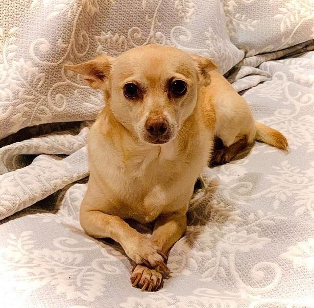 Secret Life of Pets - Rescue Dog