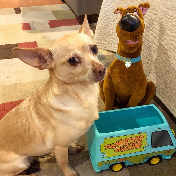 Sweet Dog Daphne and Scooby-Doo