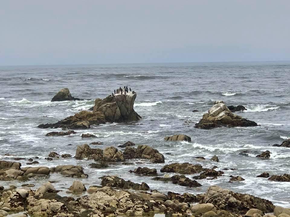 17-Mile Drive - Ocean View