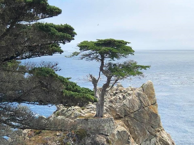 The Lone Cypress - 17 Mile Drive