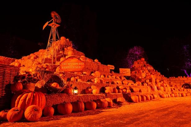 Hauntoween LA - pumpkin patch